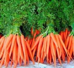 Как посеешь – так и пожнешь: раскрываем главный секрет, как получить хороший урожай моркови
