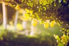 Основные правила обработки и ухода за ягодами после сбора урожая в августе