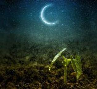 Когда сеять капусту по лунному календарю на рассаду: советы опытных садоводов