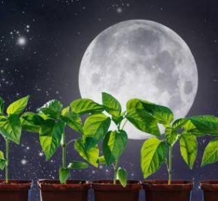 Сажаем перец на рассаду: благоприятные дни по лунному календарю и сроки посадки в 2020 году