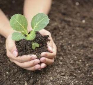 Народные средства и готовые удобрения для подкормки рассады капусты