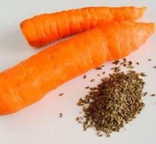 Мы расскажем о том, как прорастить семена моркови, чтобы она взошли в рекордно короткие сроки!