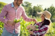 Все что нужно знать о сборе урожая кабачков