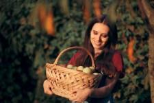 Своевременный сбор яблок