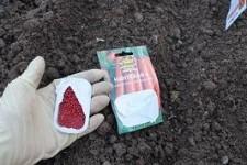 Как произвести посадку моркови гранулами - просто, быстро и удобно!