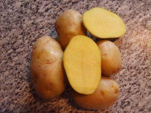 сорта картофеля отзывы