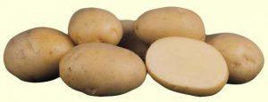 ариэль сорт картофеля