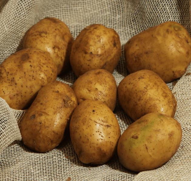 этап картошка повинь фото коллективный труд вера