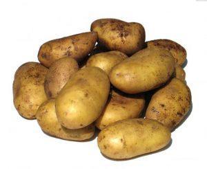 Невский сорт картофеля