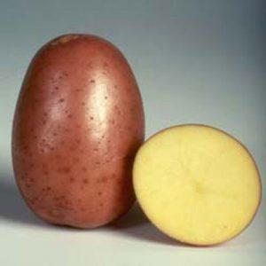 Розалинд сорт картофеля