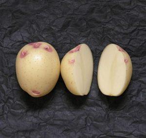 Синеглазка сорт картофеля