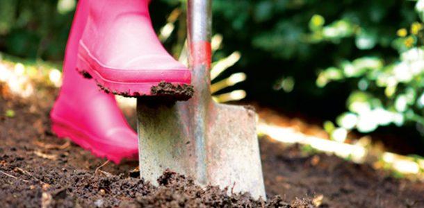 как выращивать батат