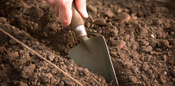 выращивание капусты белокочанной безрассадным способом