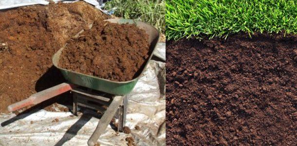 выращивание кольраби в открытом грунте