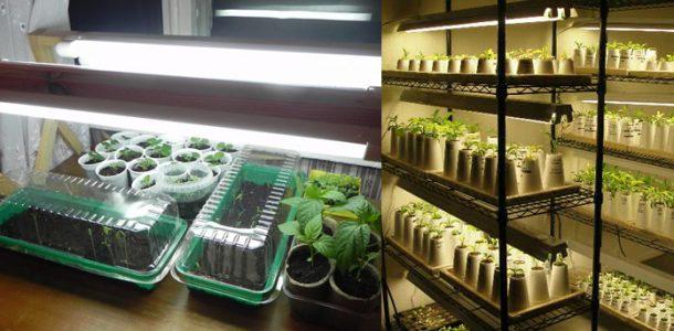 подсветка для рассады капусты