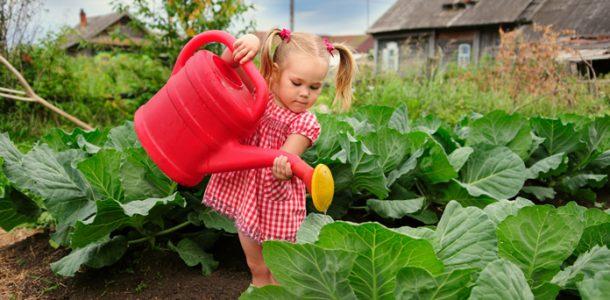 высадить капусту рассаду
