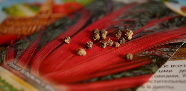 мангольд выращивание из семян