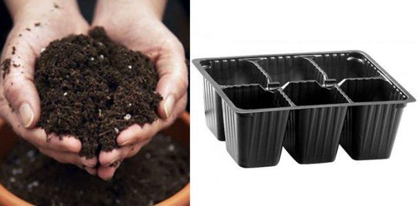 рассада выращивание