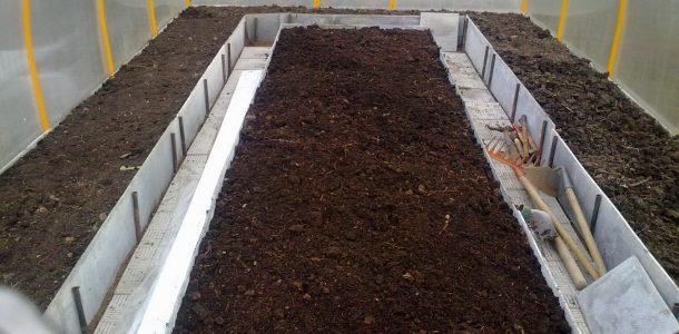 выращивание баклажанов в теплице из поликарбоната