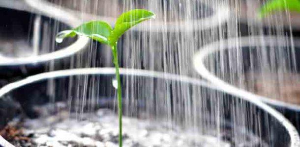 повышение всхожести семян