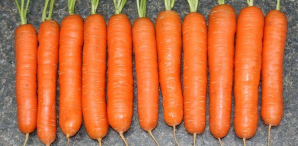 морковь семена сорта