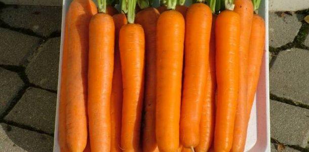 морковь сорта фото