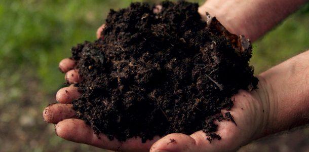 условия выращивания баклажанов