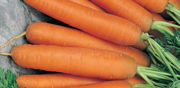 сорта моркови для посадки