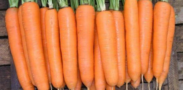 сладкий сорт моркови