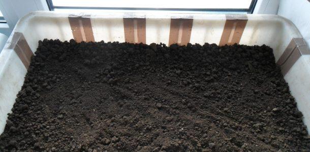 посадка семян капусты в открытый грунт