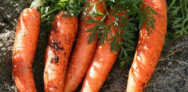 Лучшие сорта семян моркови для открытого грунта