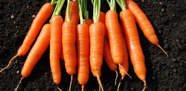 морковь описание сортов