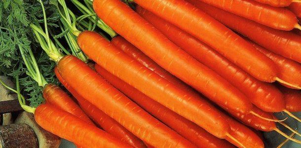 сорта моркови открытого грунта