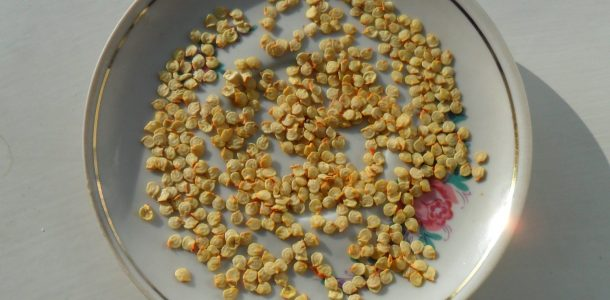 проращивание семян баклажан