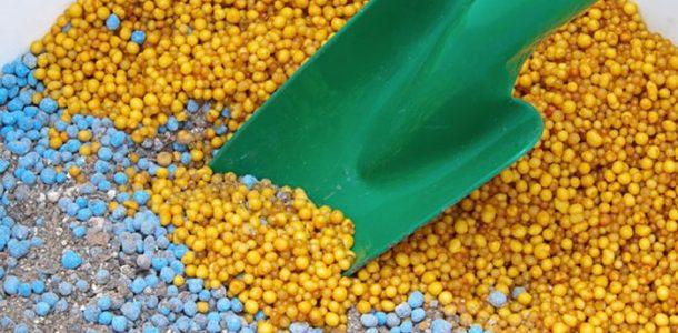 Профилактика скручивания листьев рассады баклажан