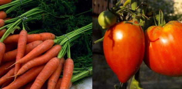 после каких культур можно сажать морковь