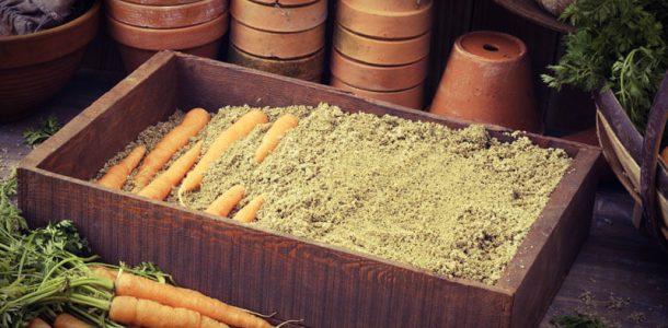как хранить морковь в погребе
