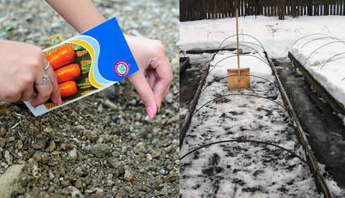 Как подготовить землю под морковь осенью