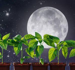 Когда и как сажать (сеять) перец на рассаду в 2020 году по Лунному календарю