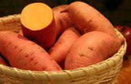 Выращивание сладкого картофеля (батата)