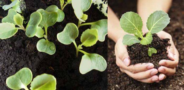 посев семян рассаду