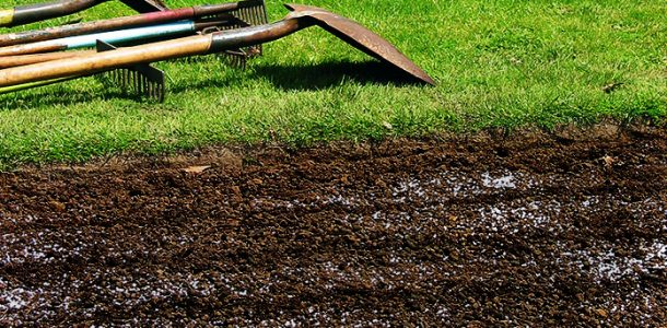 кольраби как выращивать