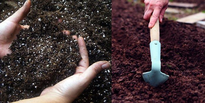высадка капусты грунт