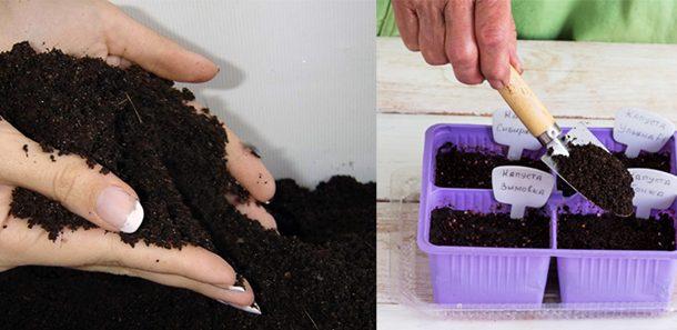 сажаем семена капусты рассаду