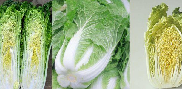 пекинская капуста выращивание и уход