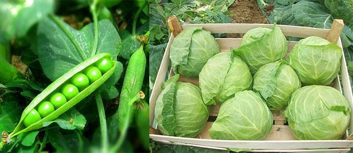 Работы в огороде в июле: что делать на дачах и приусадебных участках