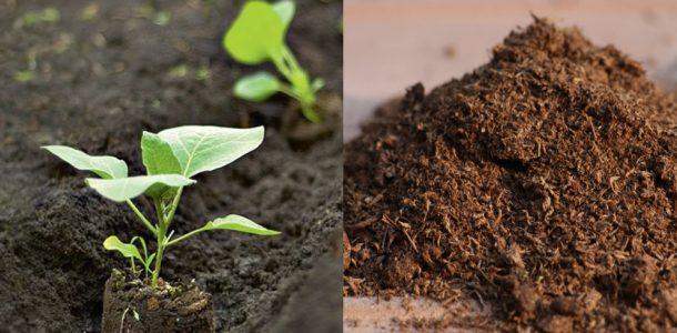 удобрение рассады баклажан