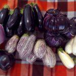 баклажаны на урале выращивание