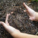 Удобрение и подкормка баклажанов