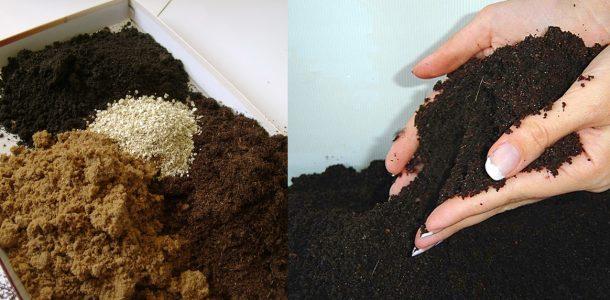 баклажаны выращивание рассады